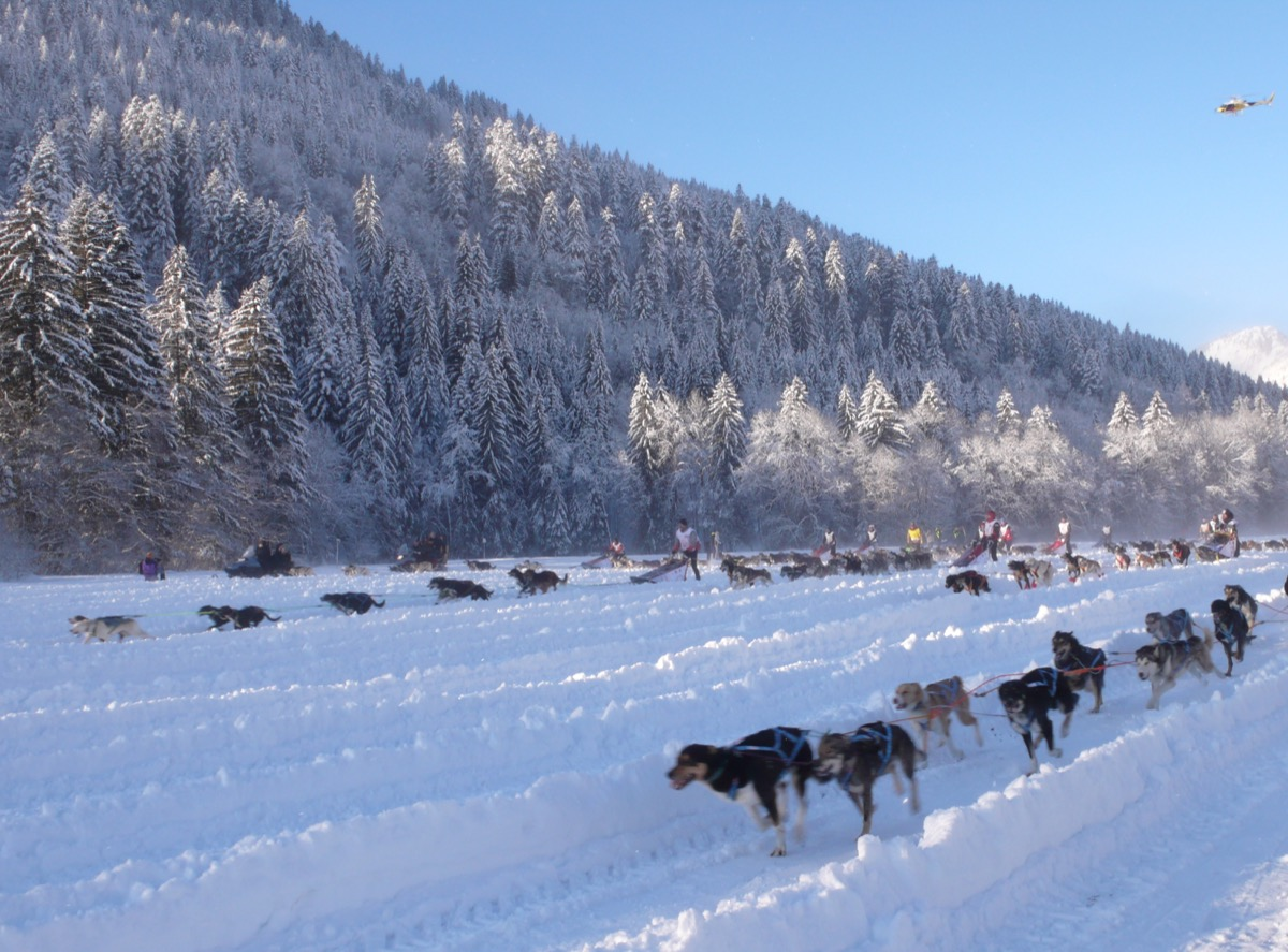 Spectacular view of an international dog sled race over 900 kilometres (560 mi) in  the French and Swiss Alps